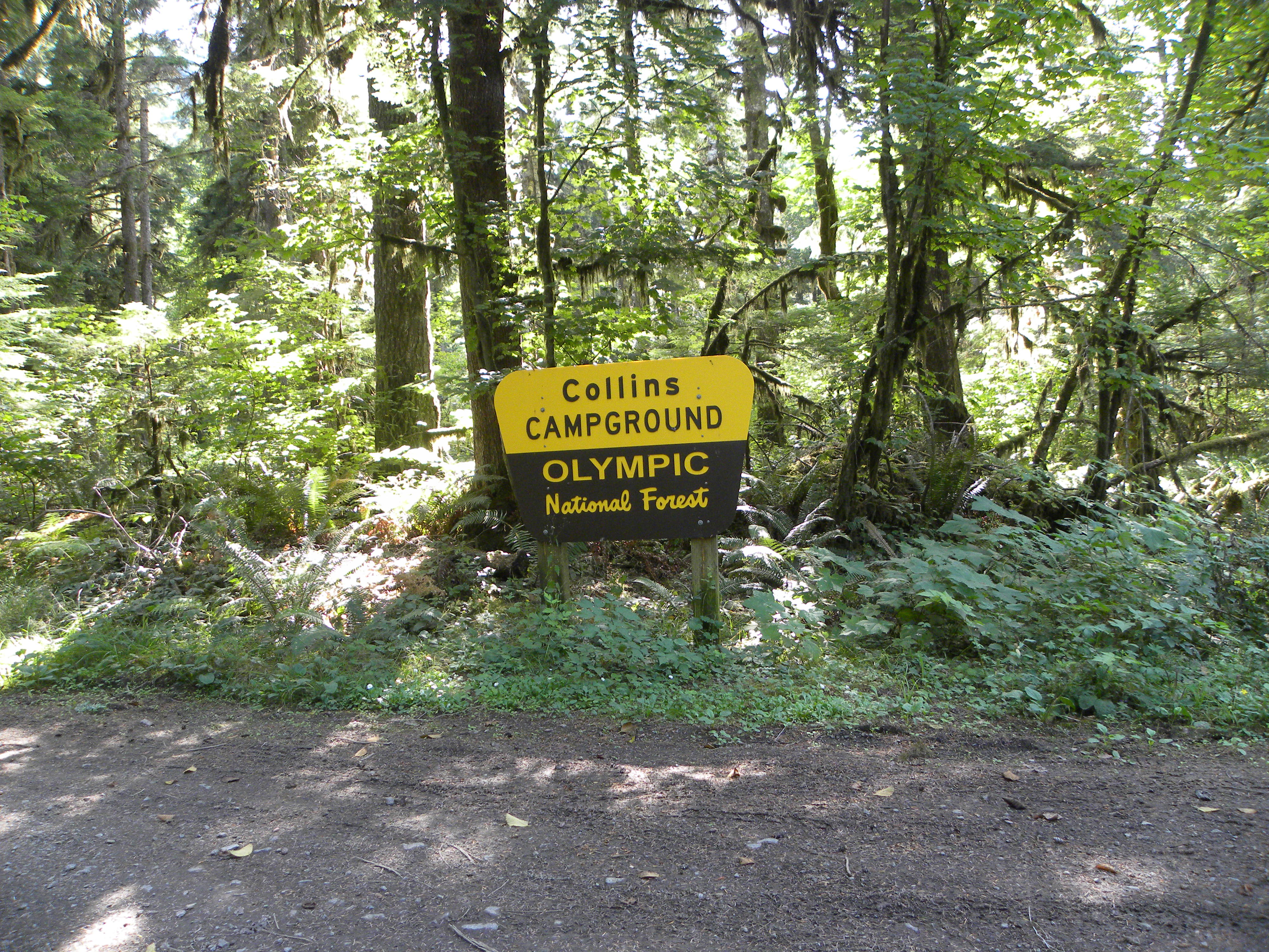 Hood canal lodging camping kayak brinnon for Cabin rentals olympic national forest